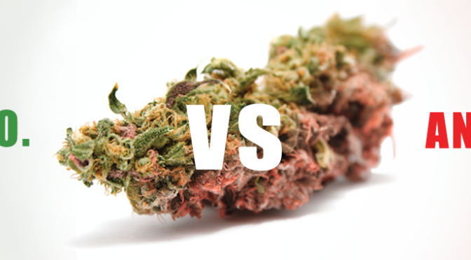 California High: The Great Marijuana Debate – Brand New Trailer!