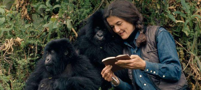 Dian Fossey: Secrets in the Mist – TV Review