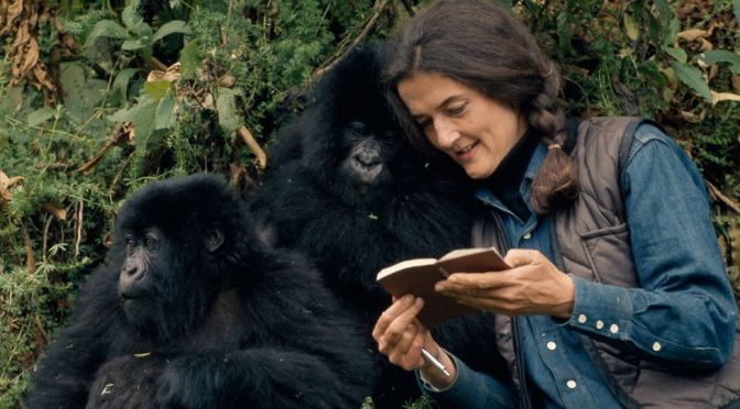 Dian Fossey: Secrets in the Mist – TV Review